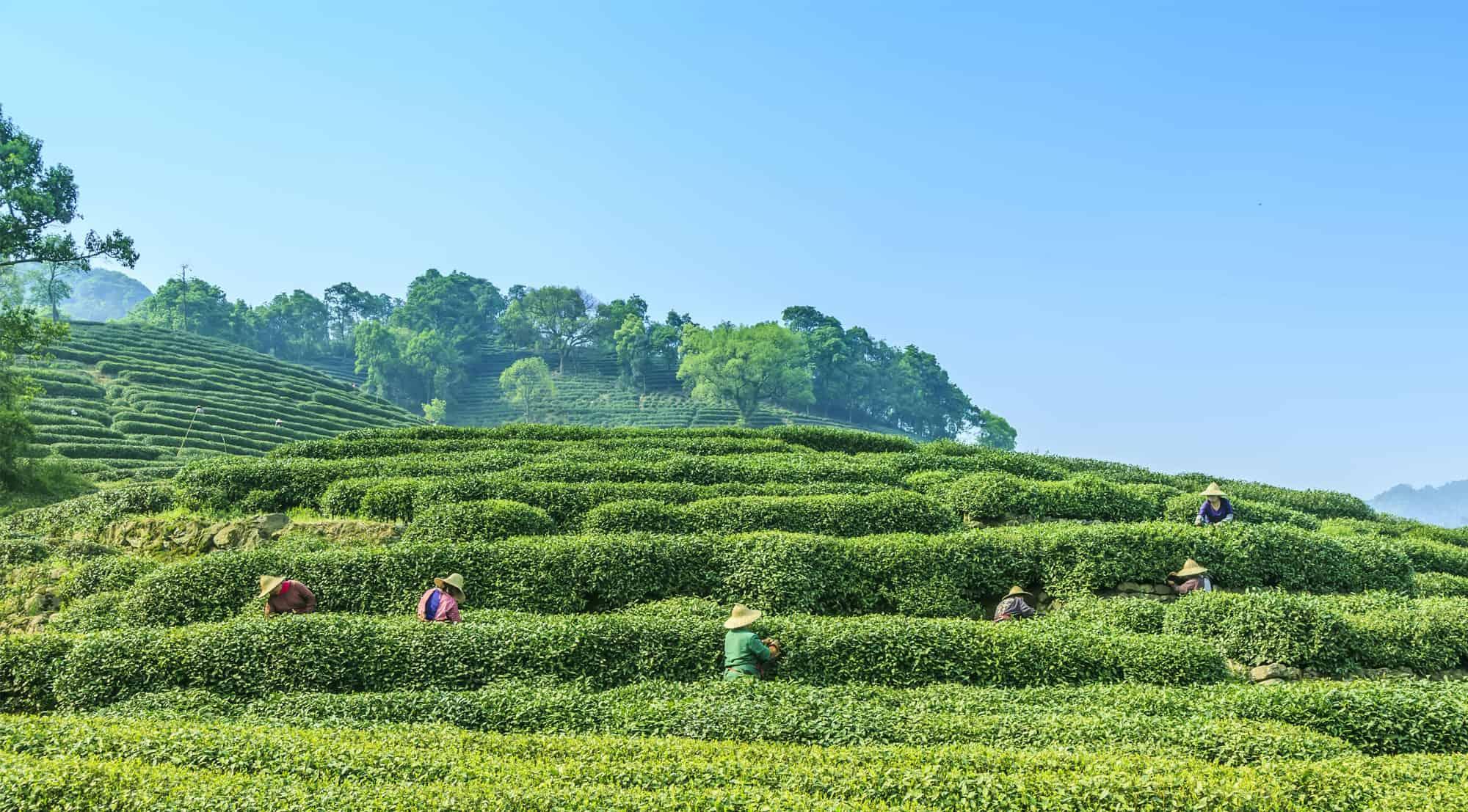 Tour du lịch trải nghiệm Ntea Farm Thái Nguyên