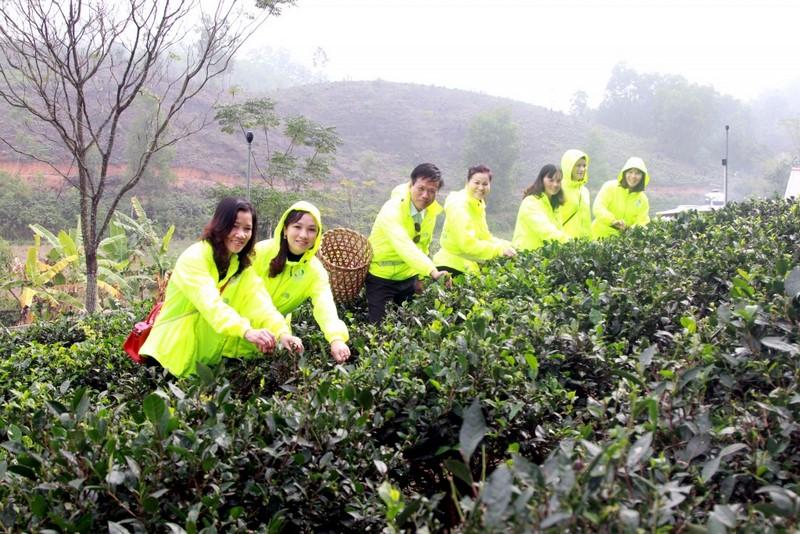 Tự tay làm trà, mang quà về biếu - hành trình trải nghiệm tại Ntea Farm