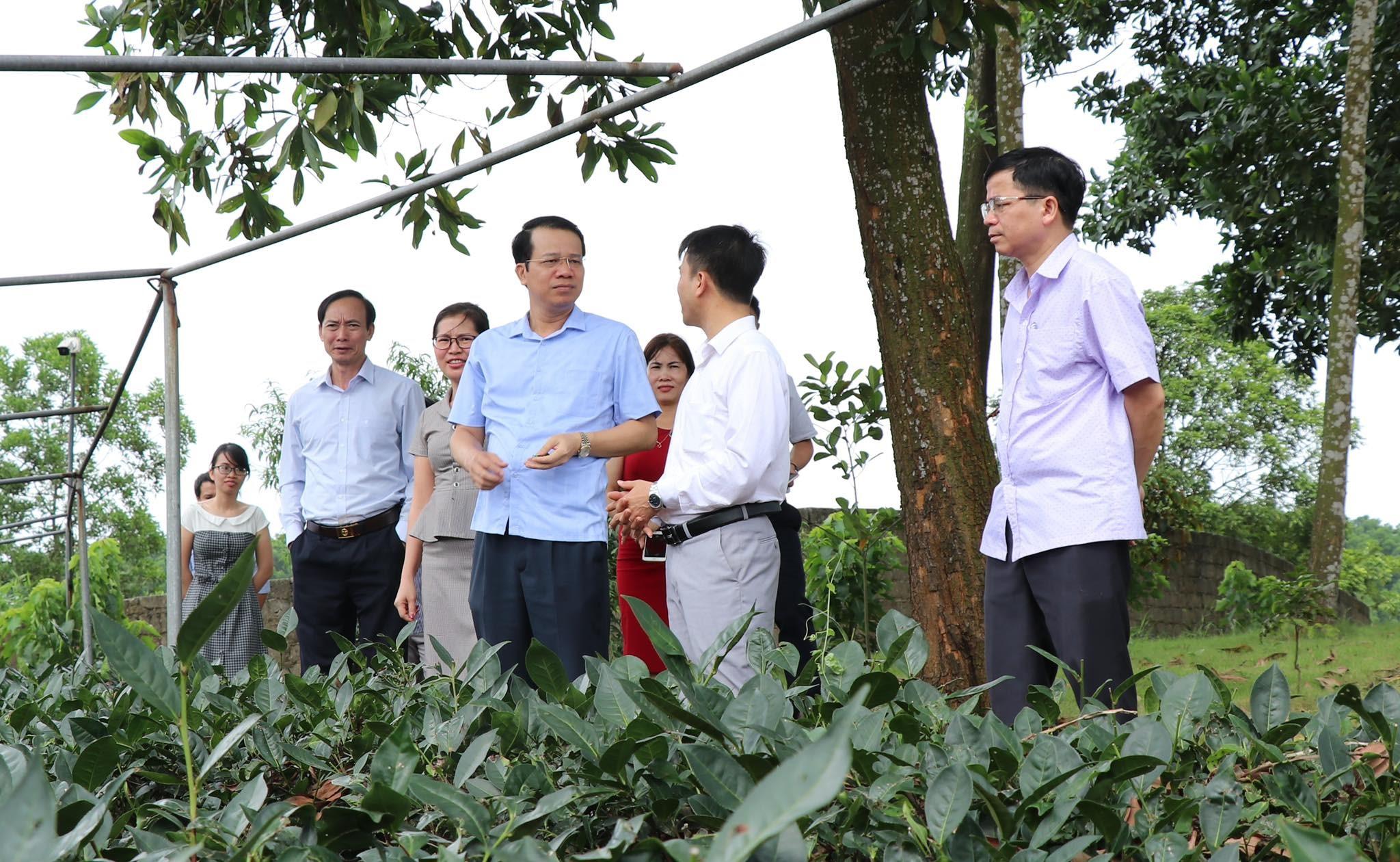 Ntea Thái Nguyên - Đơn vị thành viên xuất sắc trong lĩnh vực sản xuất nông nghiệp hữu cơ của Tập đoàn Ntea Group